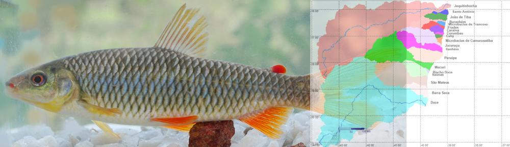 Peixes dos Tabuleiros