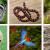 SBPC e ABC promovem debate sobre a Lei de Biodiversidade